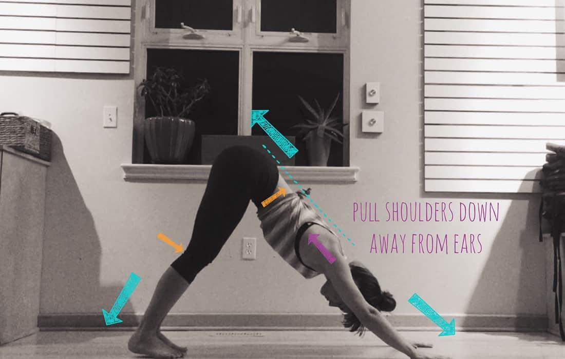 Yoga Feature - Part:2 Refine Your Dog