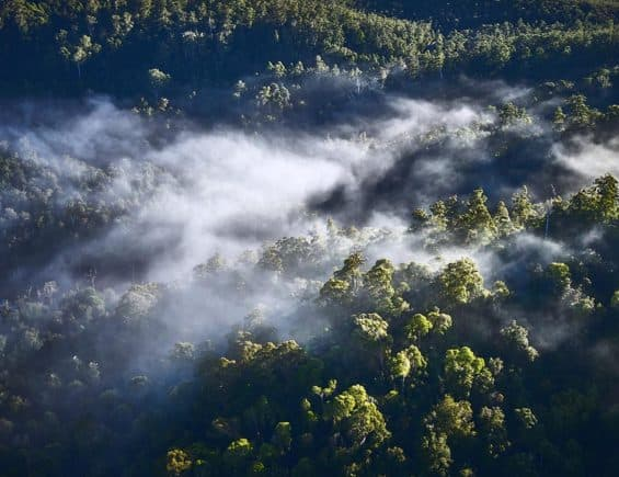 Patagonia Set Their Sights On Saving The Tarkine