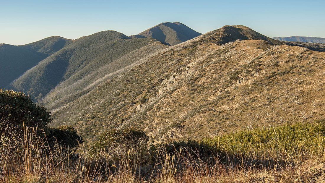 hiking feathertop