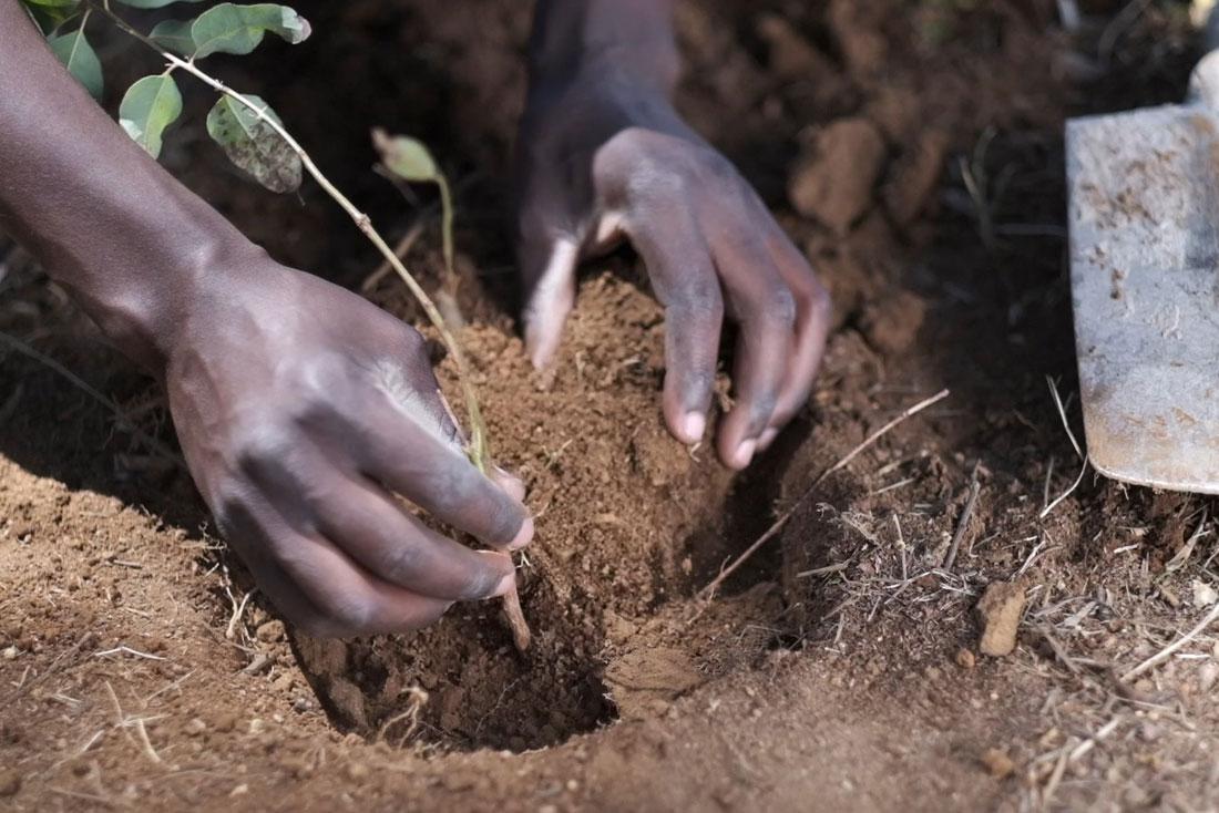 endura million trees